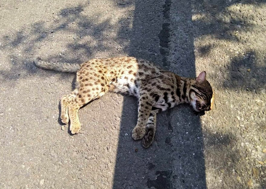 誰殺了石虎